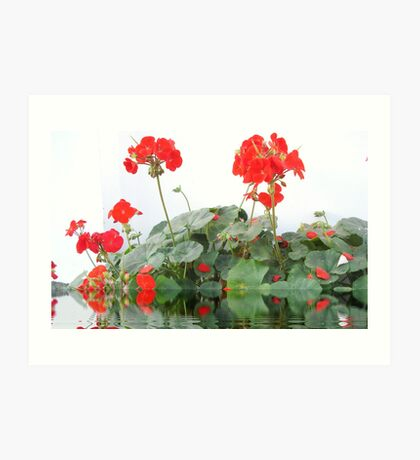 beautiful flower in Viet Nam 2 Art Print