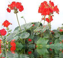beautiful flower in Viet Nam 2 by sadspring2001