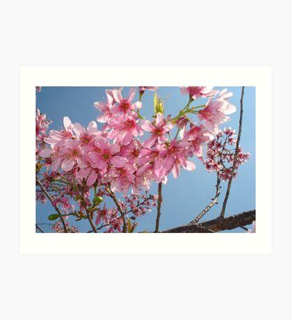 beautiful flower in Viet Nam 5 Art Print