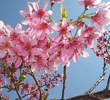 beautiful flower in Viet Nam 5 by sadspring2001