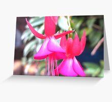 beautiful flower in Viet Nam 7 Greeting Card