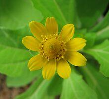 beautiful flower in Viet Nam 11 by sadspring2001
