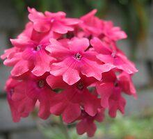 beautiful flower in Viet Nam 12 by sadspring2001