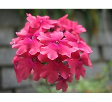 beautiful flower in Viet Nam 12 Photographic Print