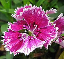 beautiful flower in Viet Nam 13 by sadspring2001
