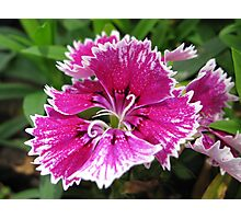 beautiful flower in Viet Nam 13 Photographic Print