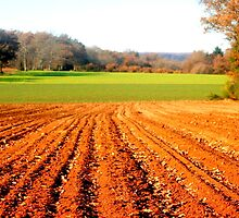 Sunrise furrows by Nigel Butfield