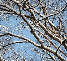 Winter Trees And Blue Sky by Dobromir Dobrinov