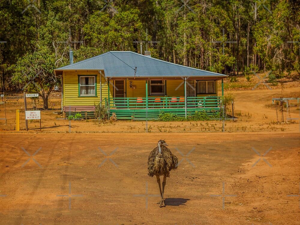 Emu - Home Alone by Elaine Teague