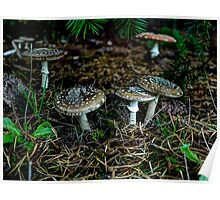 All Of One Mind ~ Amanita pantherina ~ Poster