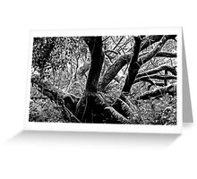 Cornish rain forest Greeting Card