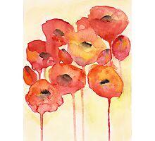 Red Poppy Photographic Print