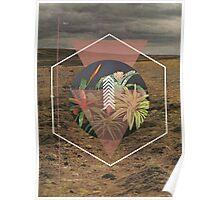 Desert Plants Poster