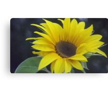 Sunflower picture Canvas Print
