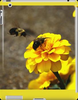Bumble Bee by AlexSzabo