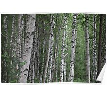 Lapland Anno Domini. 2013. Andrzej Goszcz. (Brown Sugar). Poster