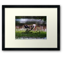 MALE STORK ♥ROMANCING THE FEMALE PAINTED STORK♥-VERSION THREE-THATS AMORE-- VARIOUS APPAREL Framed Print