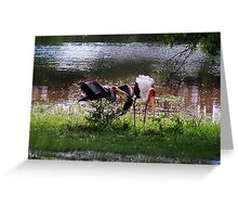 MALE STORK ♥ROMANCING THE FEMALE PAINTED STORK♥-VERSION THREE-THATS AMORE-- VARIOUS APPAREL Greeting Card