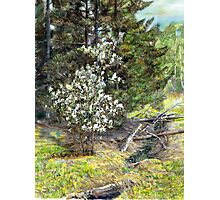 spring in the wood Photographic Print