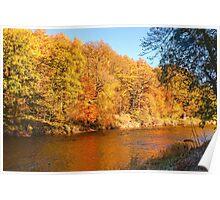 Autumn colours, riverside walk, November 2013 Poster