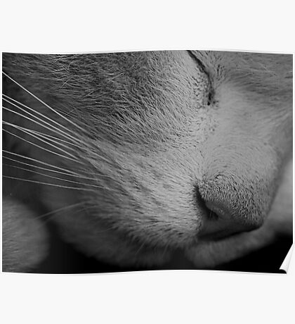 The Sleeping Cat Poster