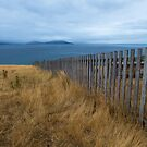 Fence Line - Maria Island Tasmania  by Barbara Burkhardt