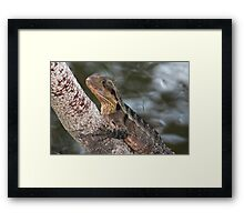 On a Tree by the Water Framed Print