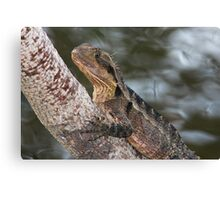 On a Tree by the Water Canvas Print