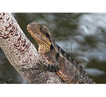 On a Tree by the Water Photographic Print