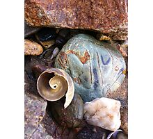 Spiral Shell Photographic Print