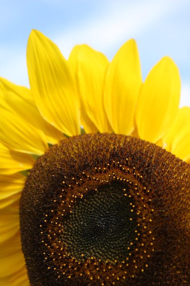 The Sunflower by Jeff  Wilson