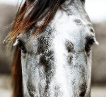 Horse by 3523studio