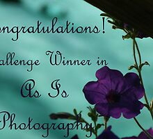 """As Is Photography"" Challenge Winners Banner by ELHaworth"