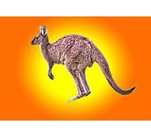 Kangaroo Down Under Photographic Print