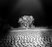 ©DA Enlightening IA Monochromatic by OmarHernandez