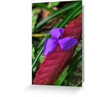 Friday Fabulous Flower Greeting Card