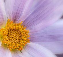 Pastel tree dahlia by Celeste Mookherjee