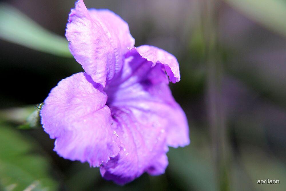 Petunia by aprilann