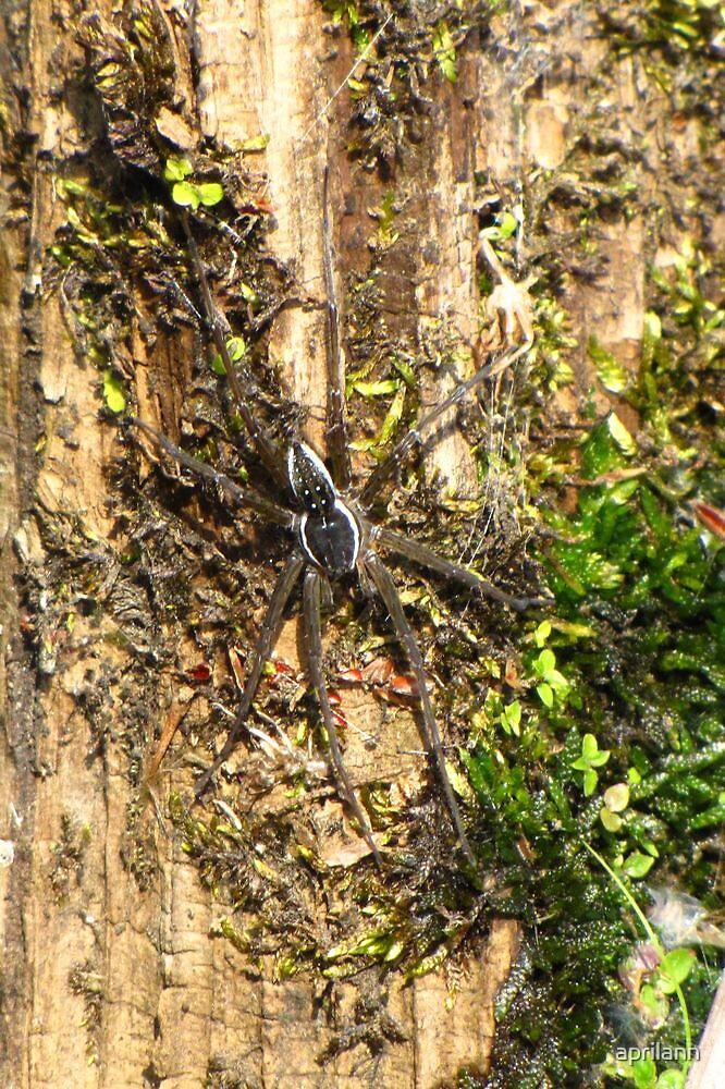 Water Spider by aprilann