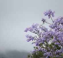 Colour on a grey day by GreenHaven