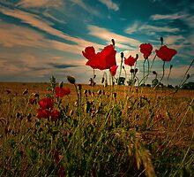 REACH FOR THE SKY by leonie7