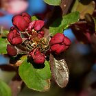 Spring Buds With Honey Bee by Diana Graves Photography