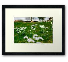 Surreal Snowdrops Framed Print