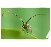 long-horned beetle Poster