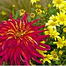 Dahlia and Daisies by John Butler