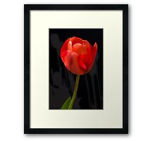 Red Tulip Shadows Framed Print