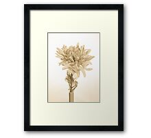 Vintage Artificial Flower Framed Print