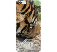 Tiger at Dudley Zoo iPhone Case/Skin