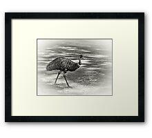 Emu Walking Framed Print