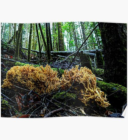 At Rest ~ Coral Mushrooms ~ Poster